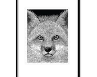 FOX PRINT 'Alfie' - Limited Edition print 8x10