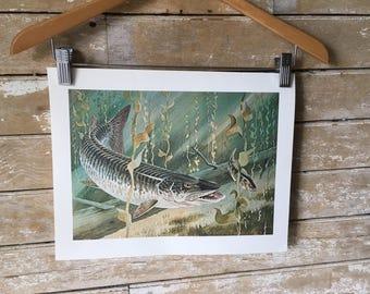 Vintage Muskie Fish print