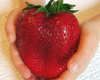 500pcs Rare Color Big Strawberry Seed Cherry Berry Fruit And Vegetable Seeds For Home Garden Planting Fragaria Ananassa Duch