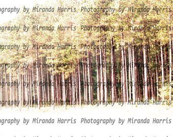 Wooded landscape; tall trees; northern scene; downloadable