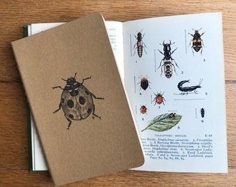 Ladybird Journal - with pen and ink illustration