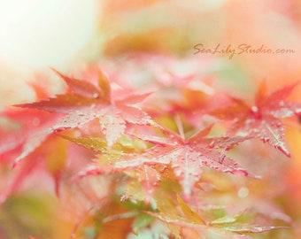 Japanese Maple I : leaf macro photography surreal photo soft focus red green orange home decor 8x10 11x14 16x20 20x24 24x30