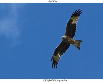 Photo print 'Red Kite'