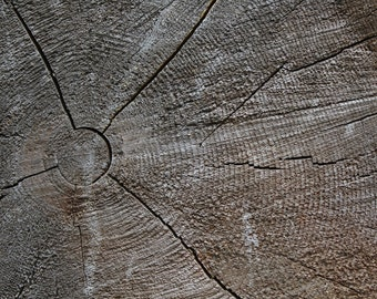 A Tree's Story