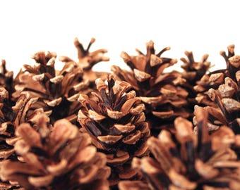 15 Raw Medium Assorted Sized Pinecones from Oregon!