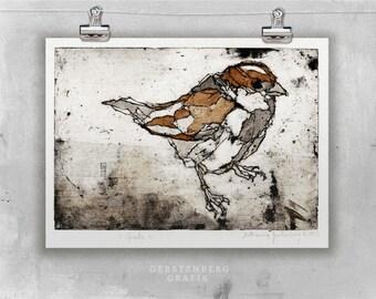 Original etching SPARROW || fine art etching, bird prints, original art, sparrow drawing, bird art || watercolor print illustration