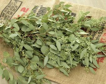 Seeded Eucalyptus Bunch- 5-7 stem