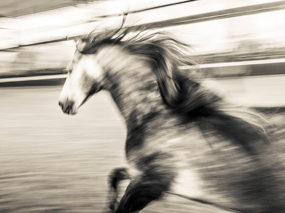 WILD AT HEART 2. Spanish Horse, Horse Print, Limited Edition, Black and White Prints, Photographic Print, Andalucia