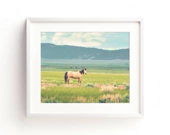 "landscape, landscape print, photography, modern, horse, large art, large wall art, contemporary, art print, wall decor - ""Summer Pasture"""