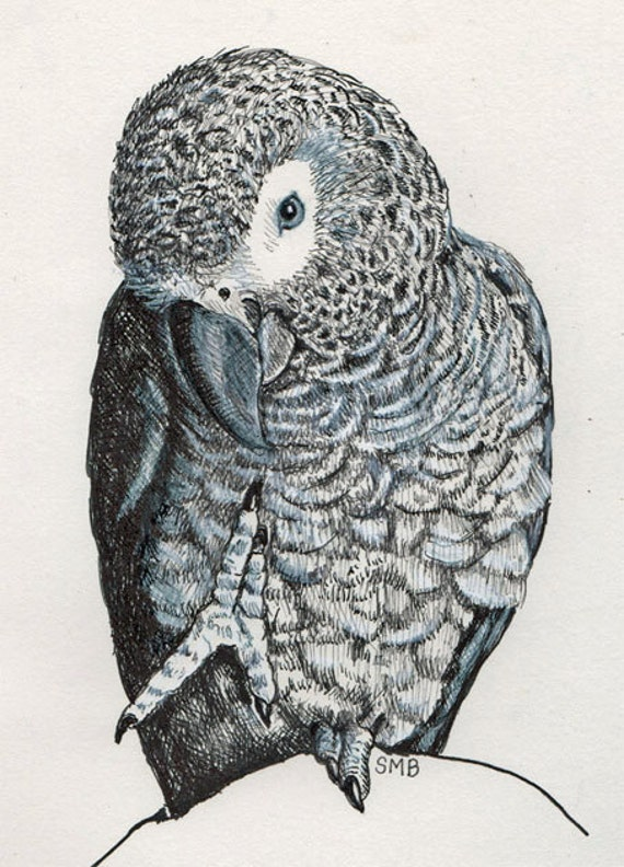 African Grey Parrot Foot Up Print from Sally Blanchard Original Drawing