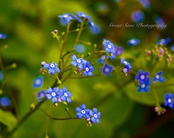 Bright and Blue, Photography, Home Decor