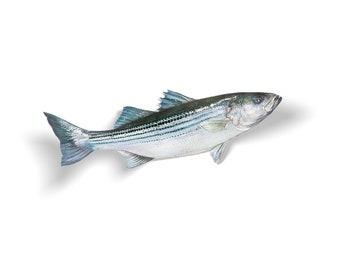Rayé sticker, autocollant rayé, rayé, poissons de roche