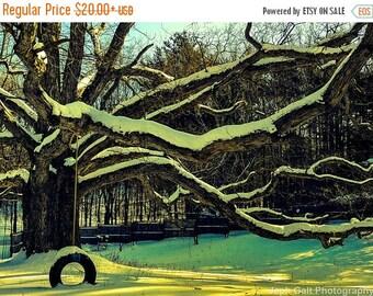 Oak Tree and Tire Swing