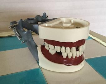 Vintage 1950's Dental Medical Model