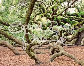 Angel Oak Tree Charleston, Live Oak Tree, Photography, Nature Photography Print, South Carolina