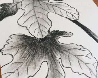Original charcoal pencil drawing. Charcoal drawing of Fig leaves and fruit.