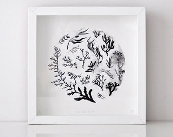 Fine Art Giclee Print - Sea Life - Unframed