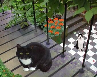 Tuxedo Cat, Isn't It Dinnertime, Cat Art Print, Cat Artwork,  Cat Wall Art, Cat Lover, Cat Gifts, Cat Lady, Deborah Julian