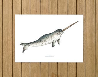 """Narwhal, Whale, Print, Poster, Giclée, Watercolor Illustration, Wall Art, Home Decor, Nursery Decor, Whale, A5, 8.5""""x11"""", A4, A3, 13""""x19"""""""