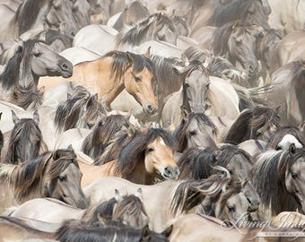 Many Faces II -  Fine Art Wild Horse Photograph - Wild Horse - Fine Art Print