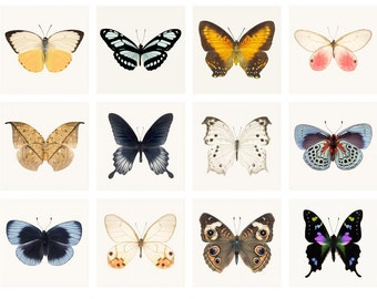 Butterfly Prints Mini Portfolio, Insect Photography Set, Affordable Art Prints, Photo Collection, 5x5 Print Set, Butterfly Photo Set