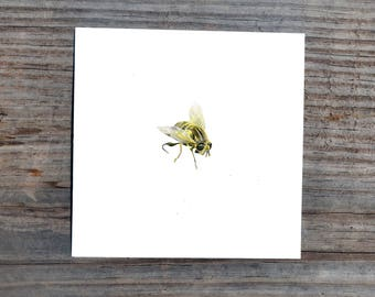 4 x 4 Bee Print