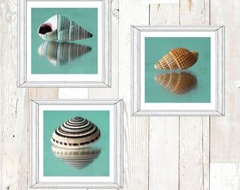 Printable Shell Art Set, Set of Three Sea Shell Photographs, Teal Beach Cottage Art, Nautical Decor,  Instant Download