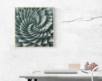 Succulents Print Cacti Print Cacti Printable Art Cactus Poster Cactus Photography Cacti Printable Cactus Printable Tinta by Bulka