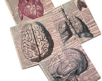 Anatomy Dictionary Art Print Coasters - Set of 4