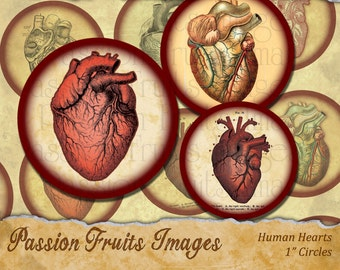 Human Hearts Anatomical collage sheet- Gothic Valentine- Digital Collage Sheet-- Instant Download