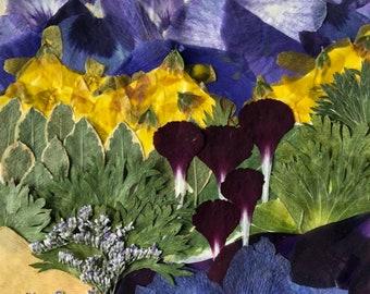 "Flower 11.18 Giclee Print 12""x18"""