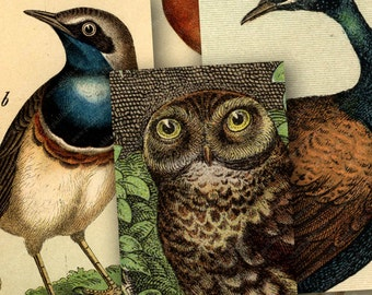 Vintage Bird and Owl Engravings in 1x2 for Dominos -- piddix digital collage sheet no. 144