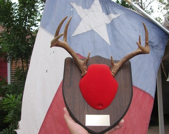 "Deer Antlers 9 points 11"" wide rack Texas wild game hunt antler hunting trophy Texan rustic decor for Texan Cabin Ranch retro Texana Lot R-1"