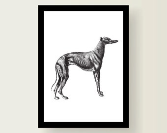 Greyhound Nursery Art Decor A3 Print