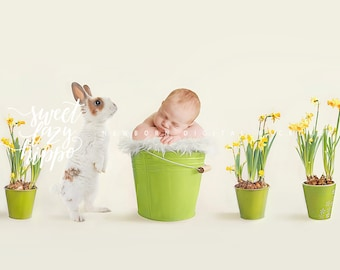 Easter / Spring Funny Newborn Digital Backdrop. 2 files for boys and for girls. Rabbit and Spring Fresh Flowers. Instant Download JPG file