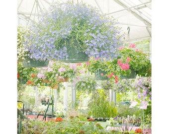 Impressionist Art, Flower Photography, Fine Art Print,  Landscape Photography, Floral Wall Art