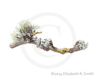 """Lichen Watercolor 8"""" x 10"""" Print"""