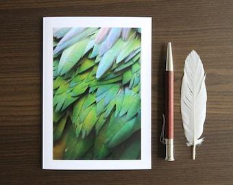 Handmade Photo Greeting Card, Blank Birthday Card, Nature Photography, 4x6 Iridescent Green Feather Art Print