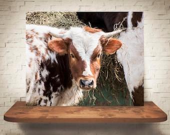 Longhorn Cattle Cow Photograph - Fine Art Print - Color Photo - Wall Art - Rustic Decor - Wall Decor - Pictures of Cows - Farmhouse Decor