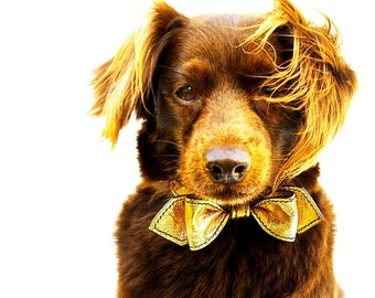 The Heart Of Gold Martini Bow Tie Dog Collar