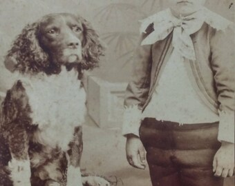 Antique Cabinet card photo Spaniel Dog and boy Brittney Spaniel,Springer Spaniel