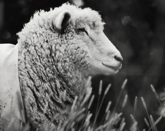 Farm Life - 5x7 Fine Art Photograph