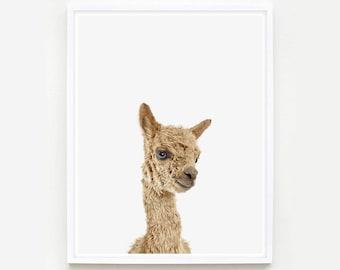 Baby Animal Nursery Art Print. Baby Alpaca Little Darling. Farm Animal Wall Art. Animal Nursery Decor. Baby Animal Photo.