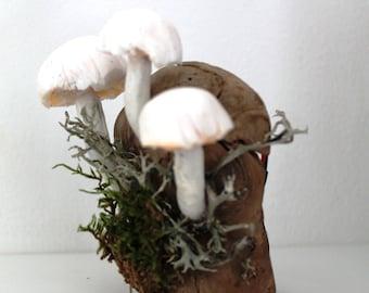 Bright yellow mushrooms