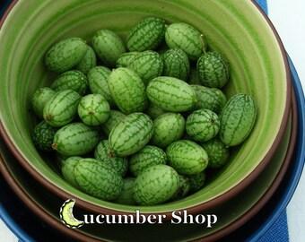 Mexican Sour Gherkin (Cucamelon)