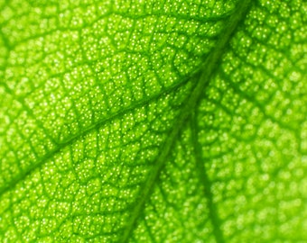 Leaf Macro Photography, Personalized Print