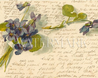 Violet Bouquet Catherine Klein French Script Writing Victorian 1903 Post Card Ephemera Vintage Scrapbook Instant Digital Download Printable