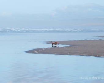 Doggy Heaven Beach Photography, Ocean Print, Dachshund Gift, Dog Lover Gift, Coastal Wall Art, Pacific Ocean Photo, Blue Wall Art Nature Art