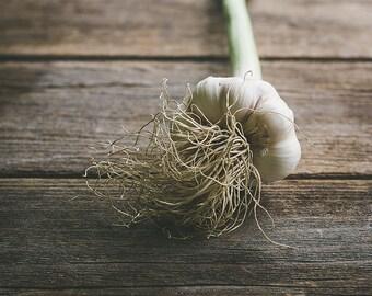 Rustic Garlic, Food Photography, Rustic Photo Print, Wall Art, Kitchen Decor, Dining Room Decor, Home Decor, Restaurant Decor
