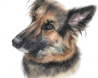 "Pet drawings, 6""x8"", Animal portraits, bespoke portraits, memorial keepsake, custom pet portraits, cat portrait, dog portrait, horse art"